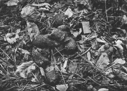 Медвежьи какашки (5 фото) » Триникси