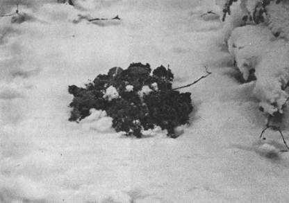 Выбросы земли из норы кротом